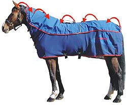 magnetic pulse machine for horses
